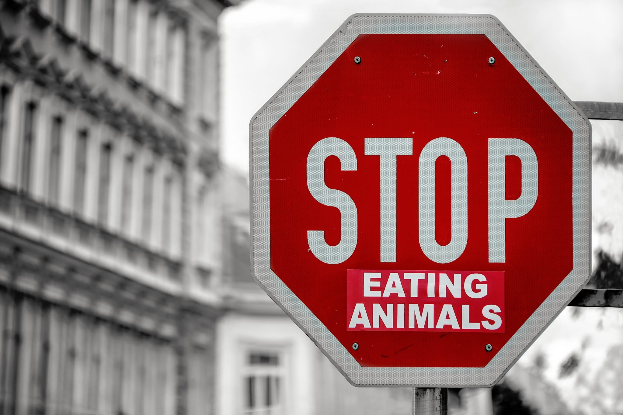 Stop eating animals stop sign