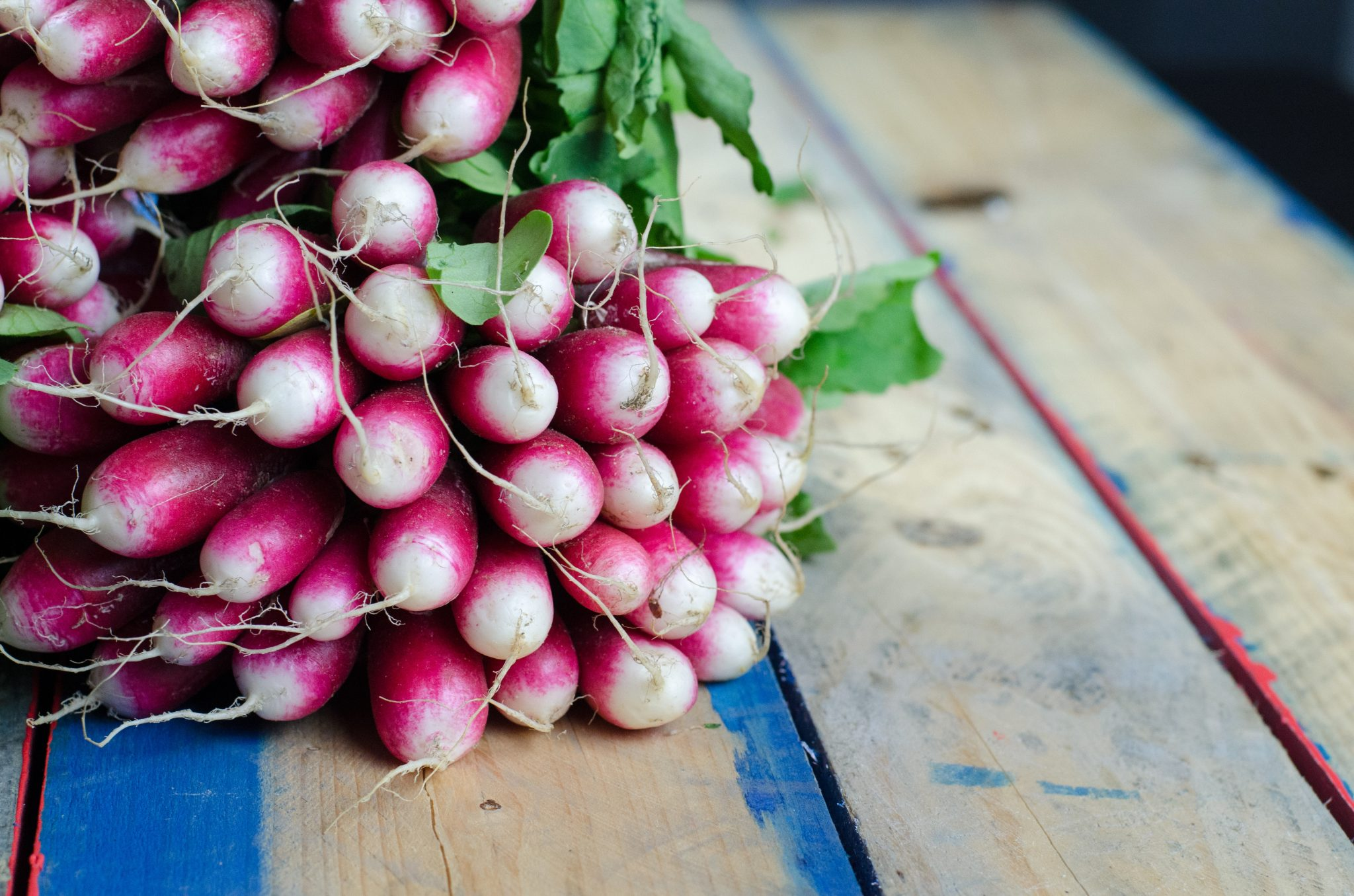 Red and white radishes in a bunch on a table
